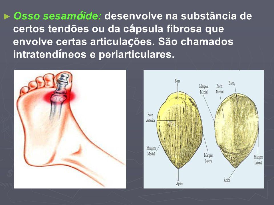Osso sesamóide: desenvolve na substância de certos tendões ou da cápsula fibrosa que envolve certas articulações.