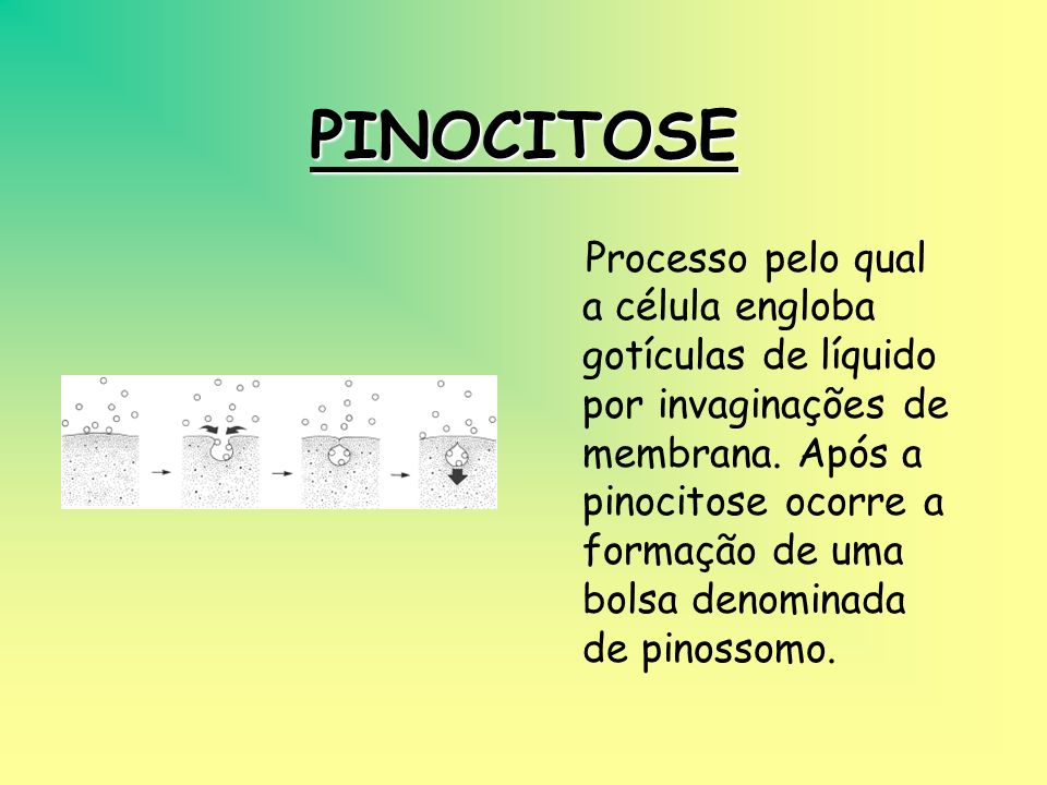 PINOCITOSE