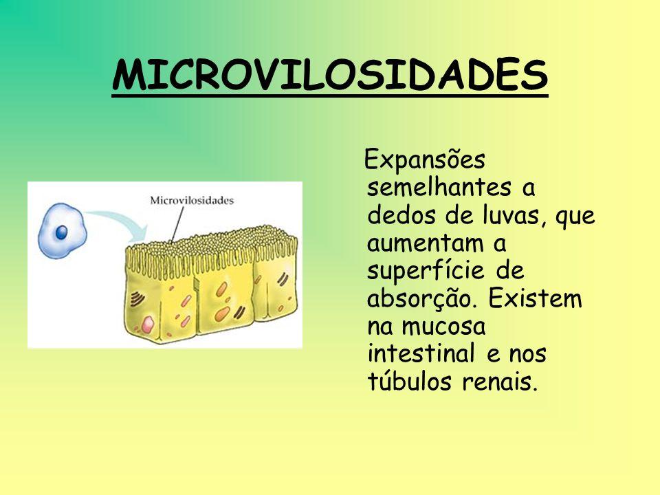 MICROVILOSIDADESExpansões semelhantes a dedos de luvas, que aumentam a superfície de absorção.