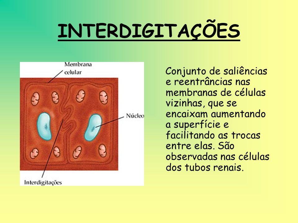 INTERDIGITAÇÕES