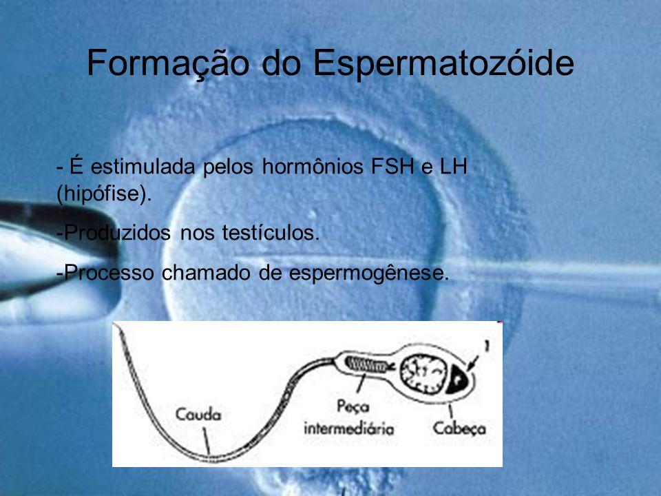 Formação do Espermatozóide