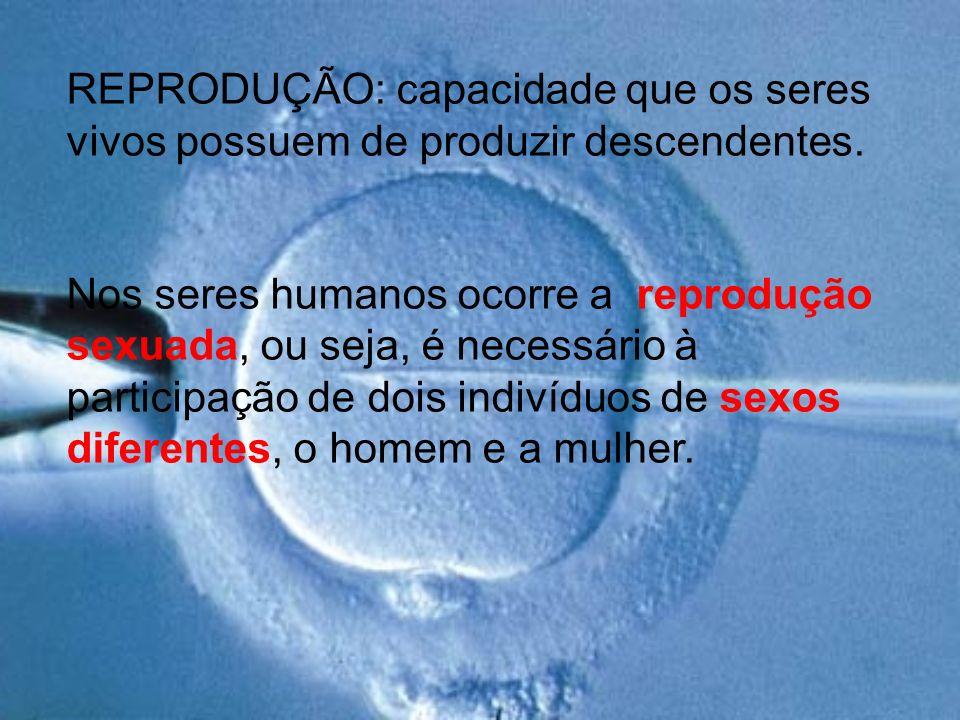 REPRODUÇÃO: capacidade que os seres vivos possuem de produzir descendentes.