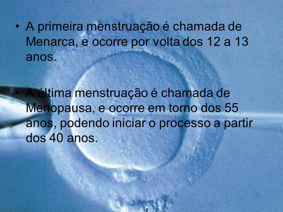 A primeira menstruação é chamada de Menarca, e ocorre por volta dos 12 a 13 anos.