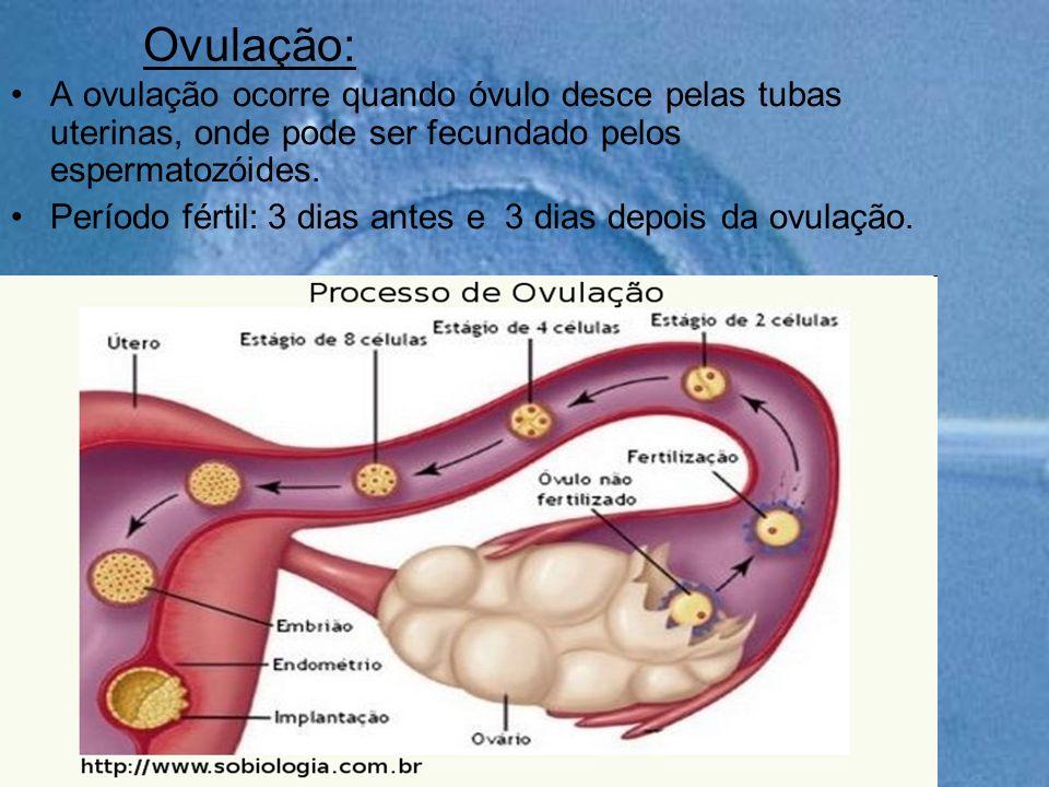 Ovulação:A ovulação ocorre quando óvulo desce pelas tubas uterinas, onde pode ser fecundado pelos espermatozóides.