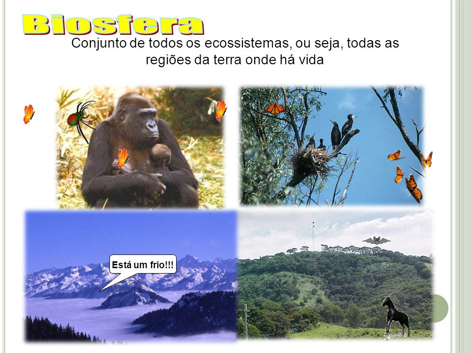 BiosferaConjunto de todos os ecossistemas, ou seja, todas as regiões da terra onde há vida.