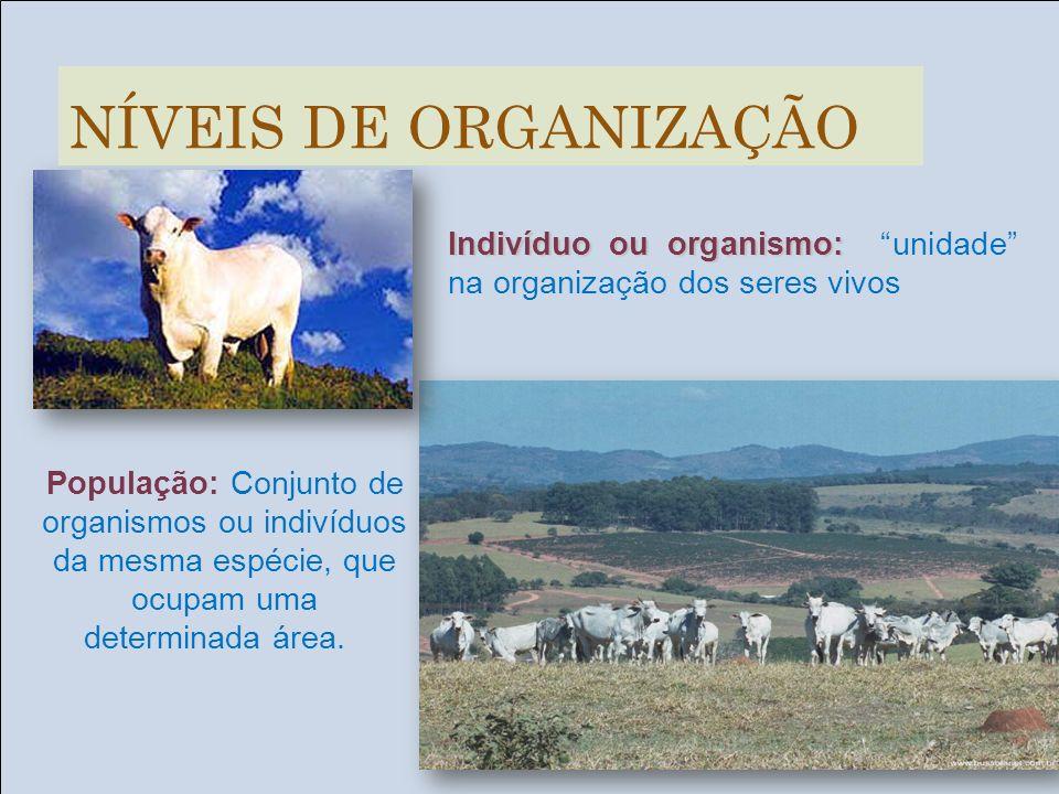 NÍVEIS DE ORGANIZAÇÃOIndivíduo ou organismo: unidade na organização dos seres vivos.