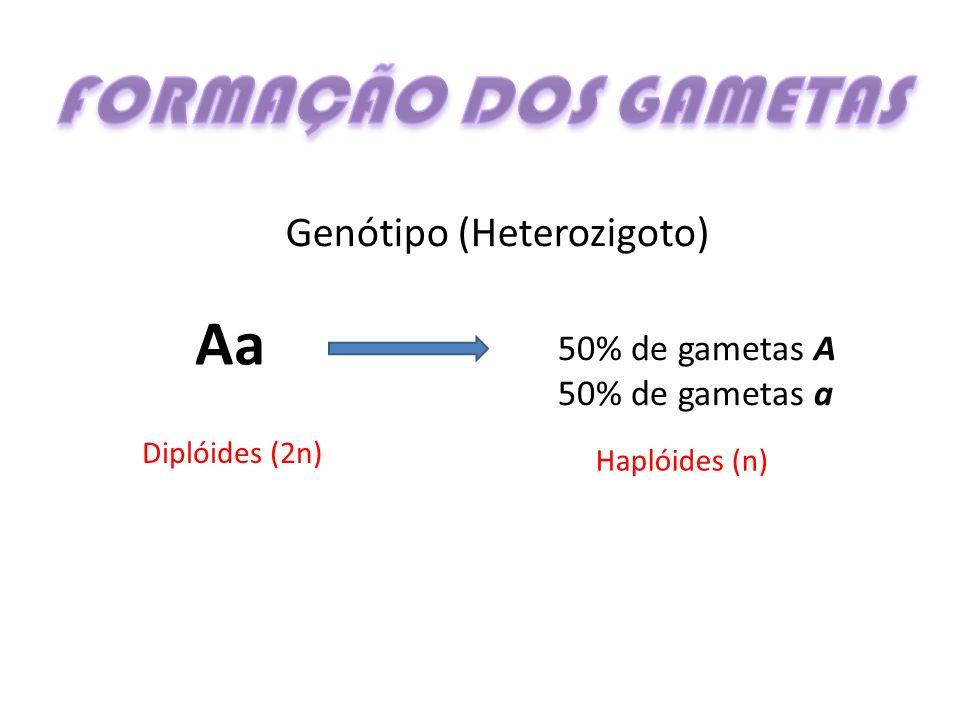 FORMAÇÃO DOS GAMETAS Aa Genótipo (Heterozigoto) 50% de gametas A