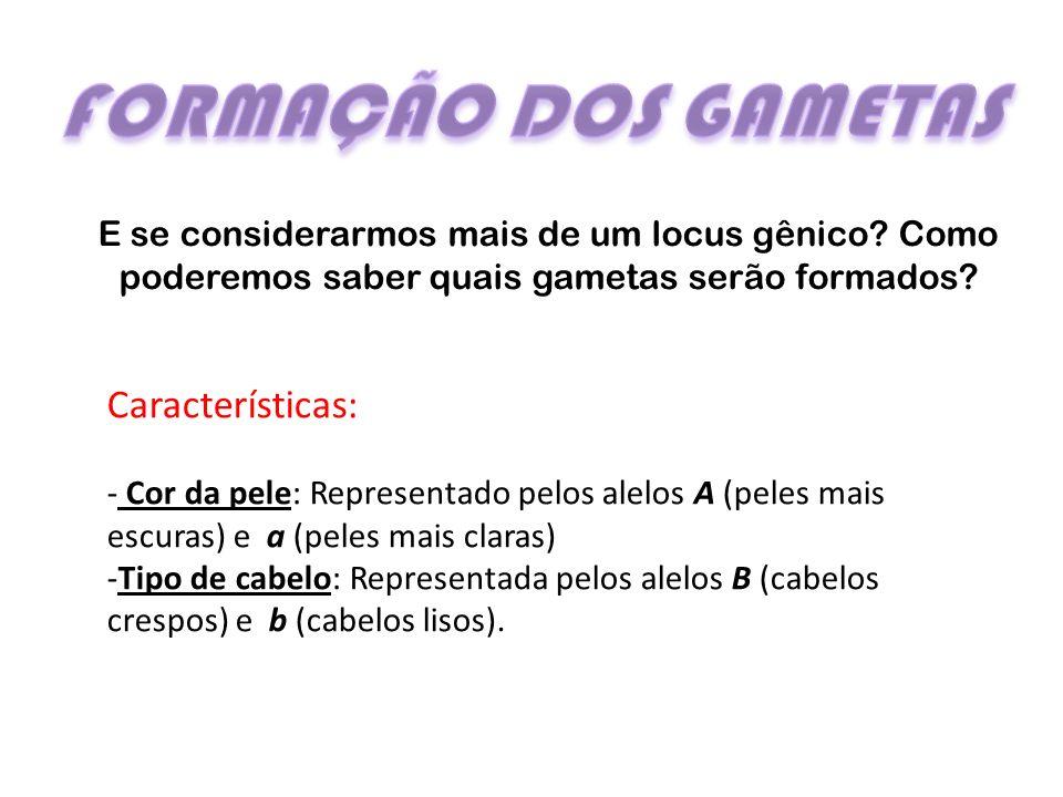 FORMAÇÃO DOS GAMETAS Características: