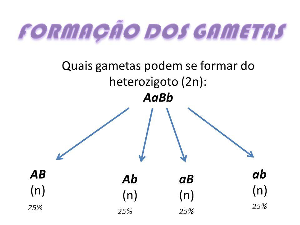 Quais gametas podem se formar do heterozigoto (2n):