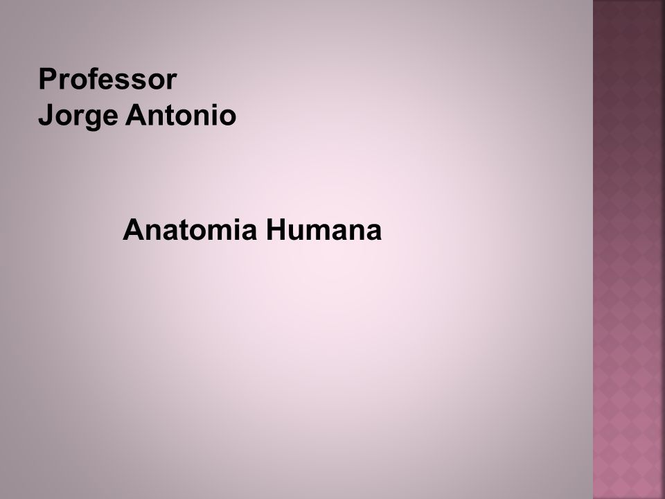 Professor Jorge Antonio Anatomia Humana