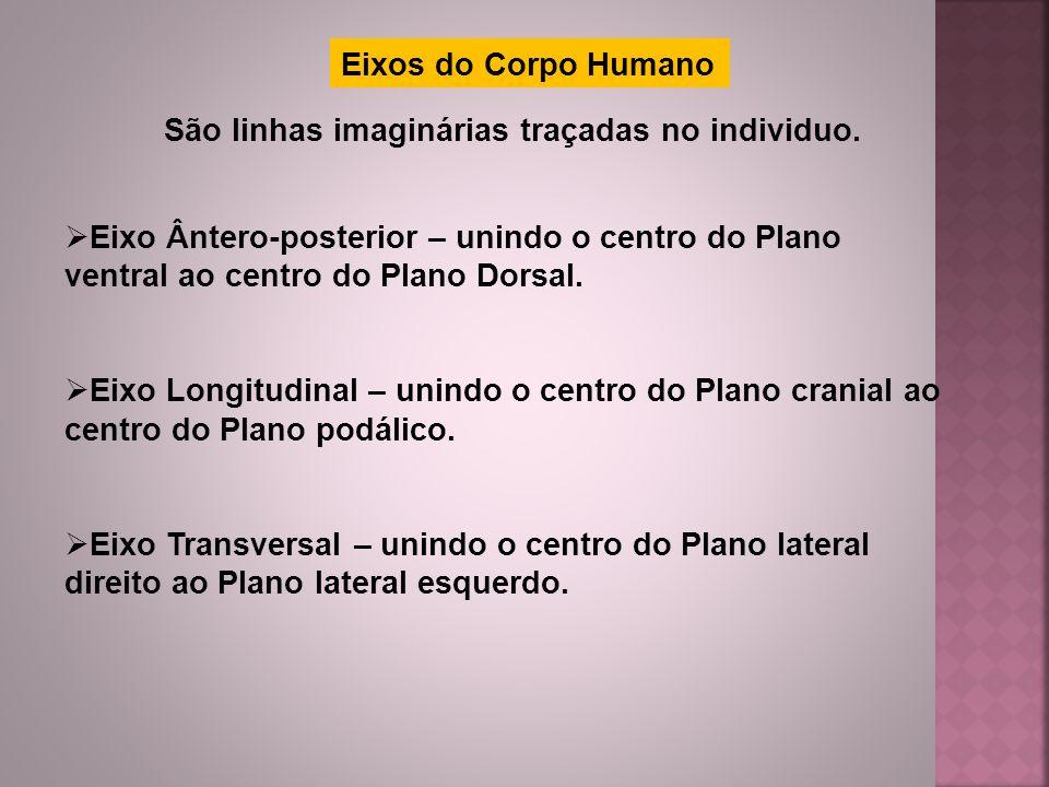Eixos do Corpo Humano São linhas imaginárias traçadas no individuo.