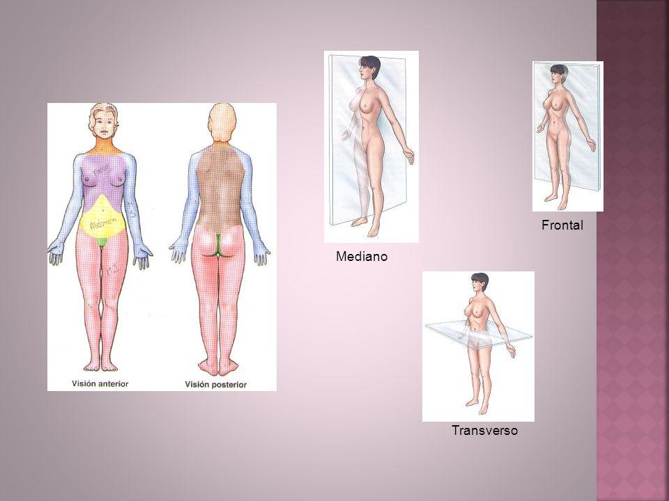 Frontal Mediano Transverso