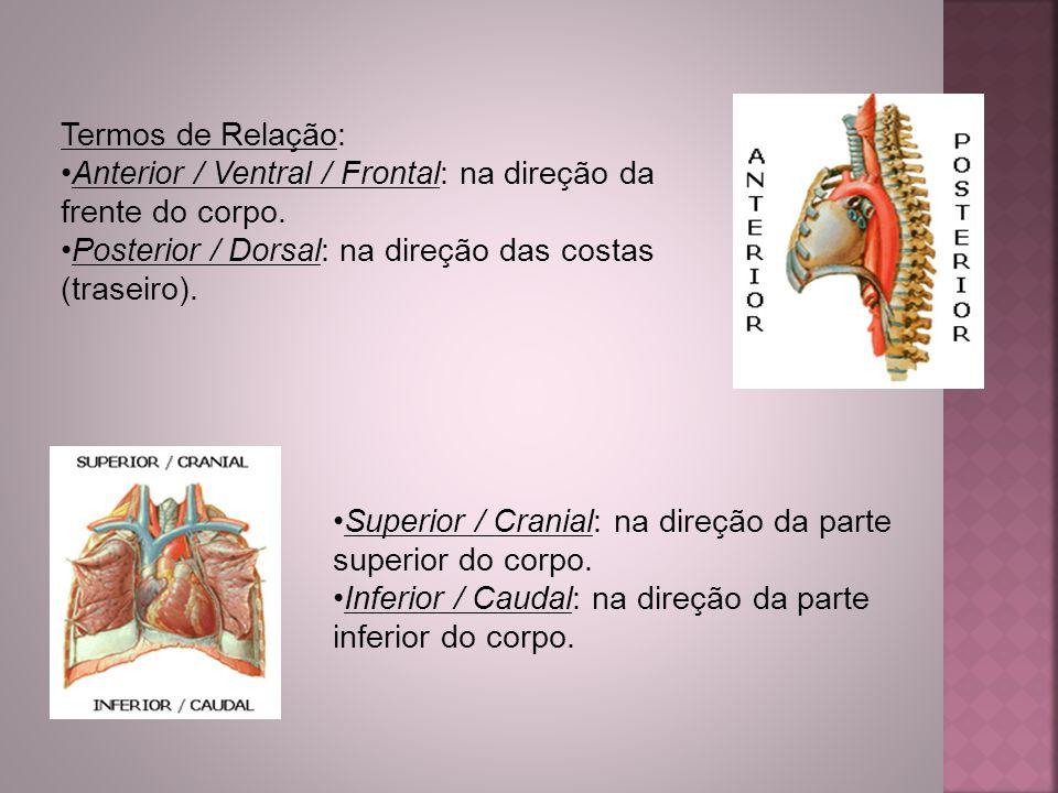 Termos de Relação: Anterior / Ventral / Frontal: na direção da frente do corpo. Posterior / Dorsal: na direção das costas (traseiro).