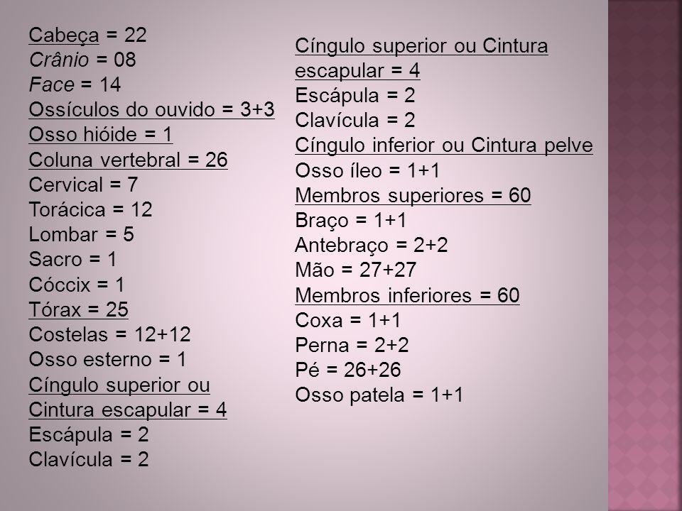 Cabeça = 22 Crânio = 08. Face = 14. Ossículos do ouvido = 3+3. Osso hióide = 1. Coluna vertebral = 26.