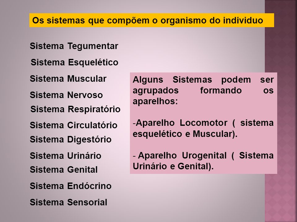 Os sistemas que compõem o organismo do individuo