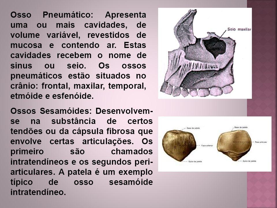 Osso Pneumático: Apresenta uma ou mais cavidades, de volume variável, revestidos de mucosa e contendo ar. Estas cavidades recebem o nome de sinus ou seio. Os ossos pneumáticos estão situados no crânio: frontal, maxilar, temporal, etmóide e esfenóide.