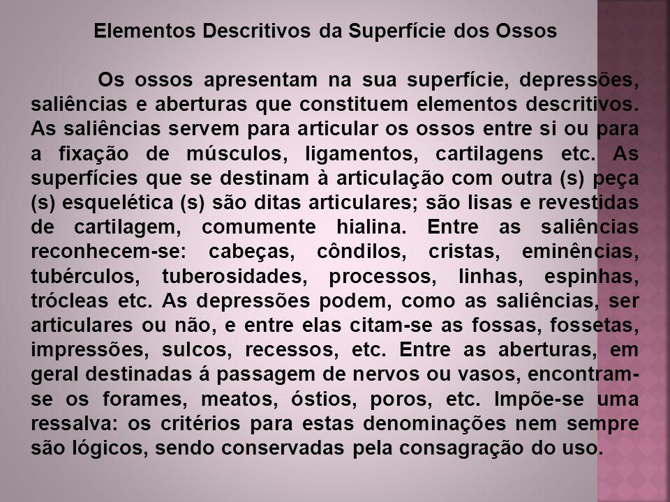 Elementos Descritivos da Superfície dos Ossos