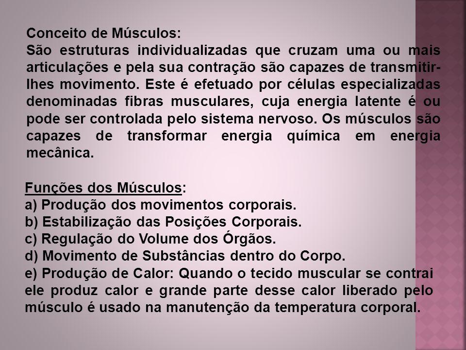 Conceito de Músculos: