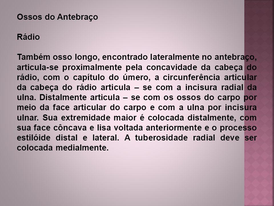 Ossos do Antebraço Rádio.