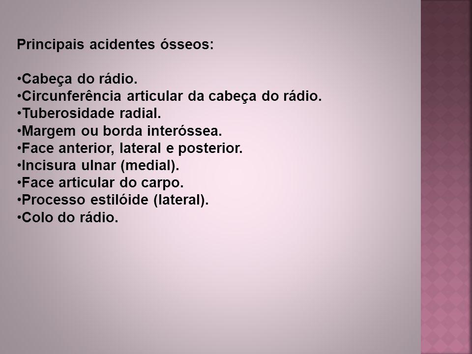 Principais acidentes ósseos: Cabeça do rádio.