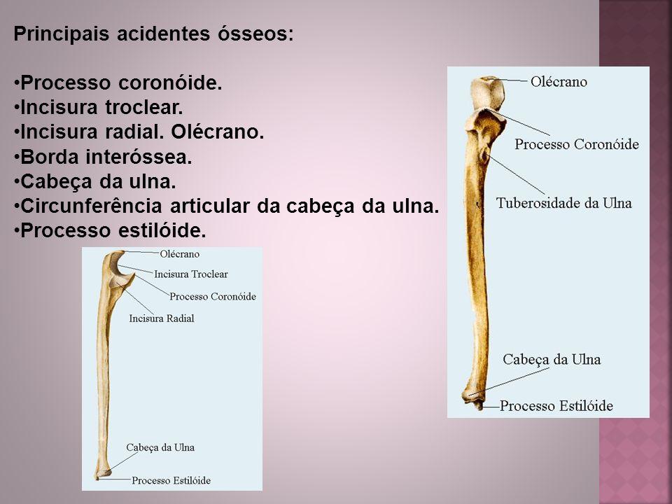 Principais acidentes ósseos: