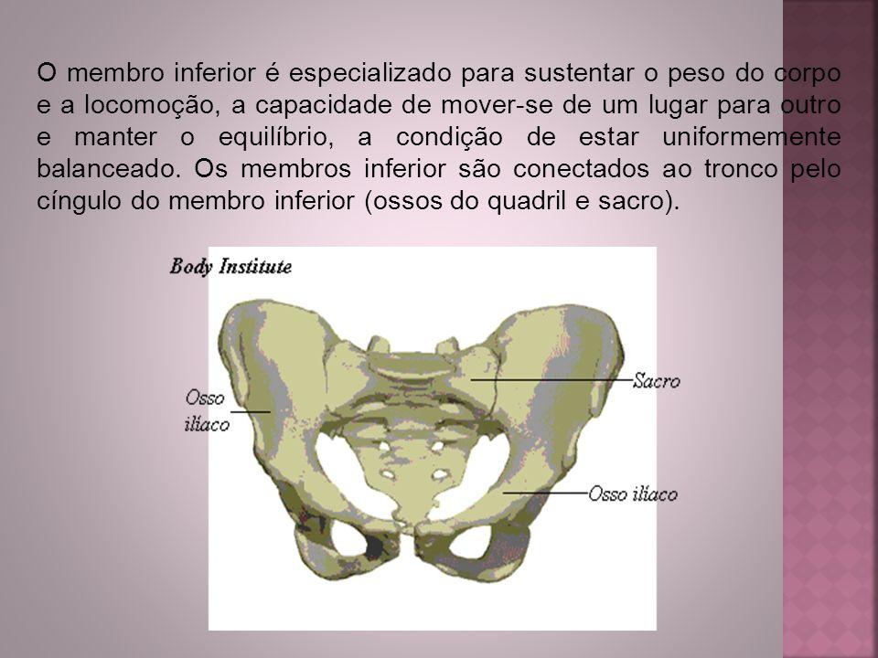 O membro inferior é especializado para sustentar o peso do corpo e a locomoção, a capacidade de mover-se de um lugar para outro e manter o equilíbrio, a condição de estar uniformemente balanceado.