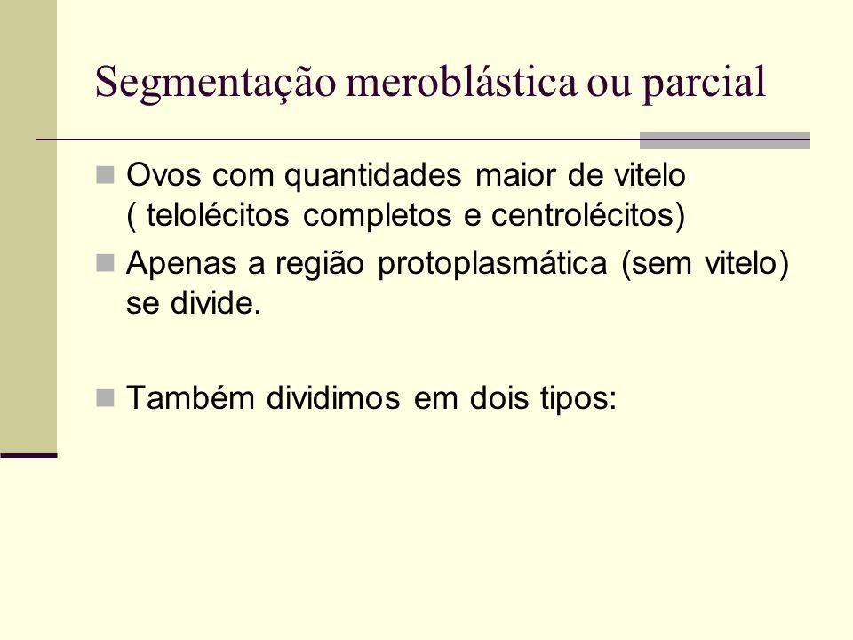 Segmentação meroblástica ou parcial