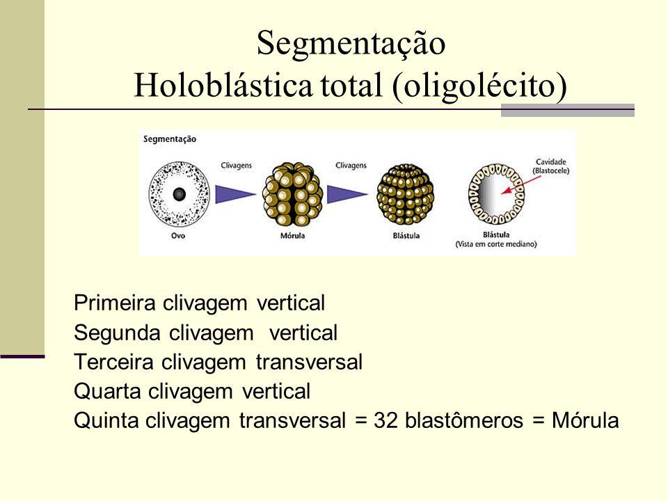 Segmentação Holoblástica total (oligolécito)