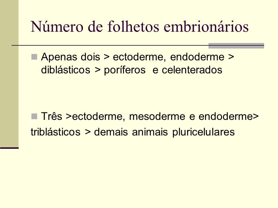 Número de folhetos embrionários