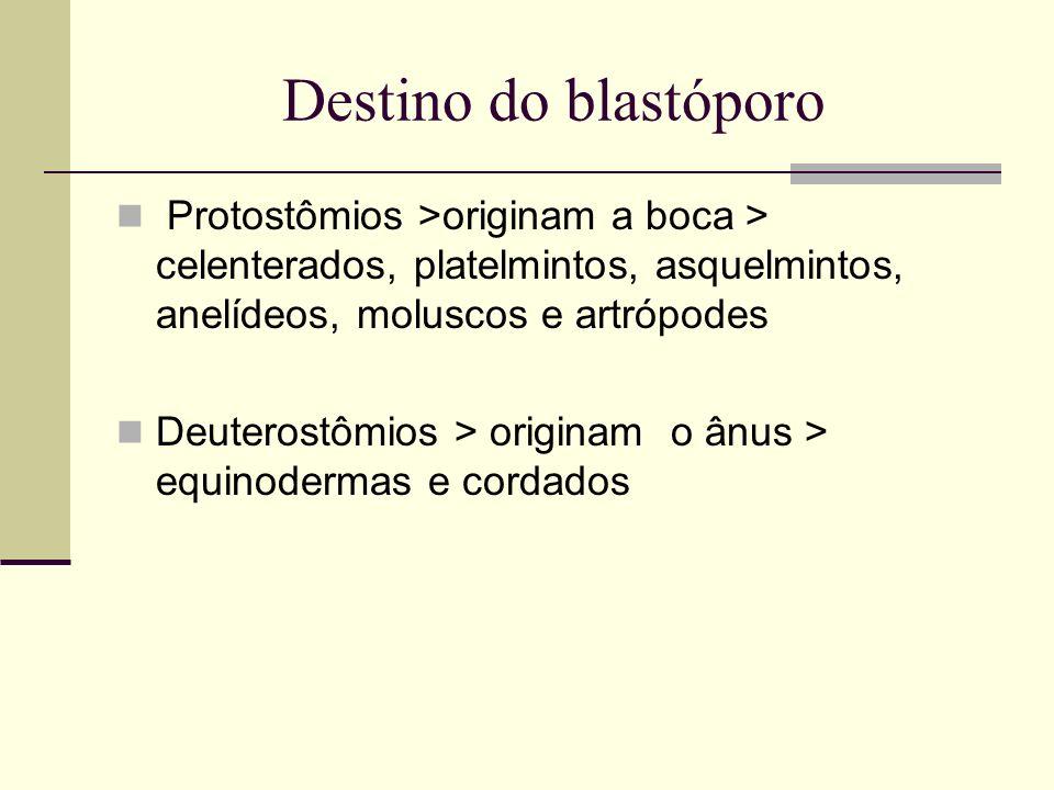 Destino do blastóporoProtostômios >originam a boca > celenterados, platelmintos, asquelmintos, anelídeos, moluscos e artrópodes.