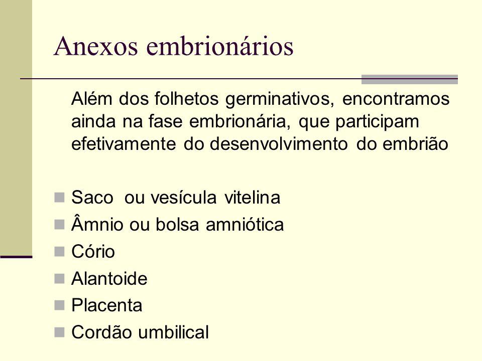 Anexos embrionários Além dos folhetos germinativos, encontramos ainda na fase embrionária, que participam efetivamente do desenvolvimento do embrião.