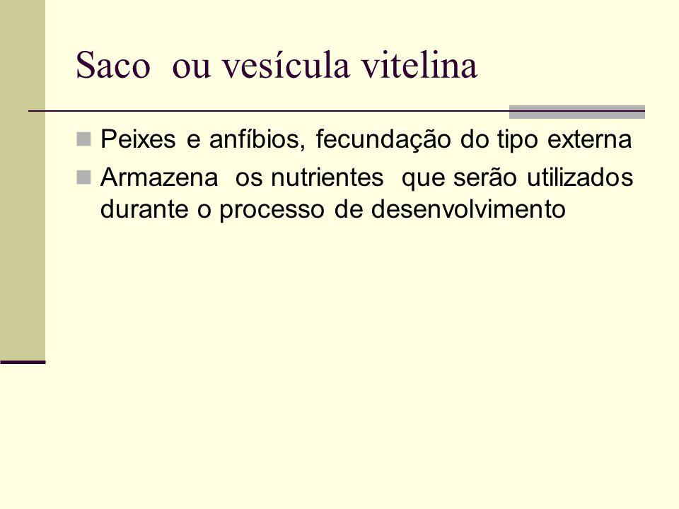 Saco ou vesícula vitelina