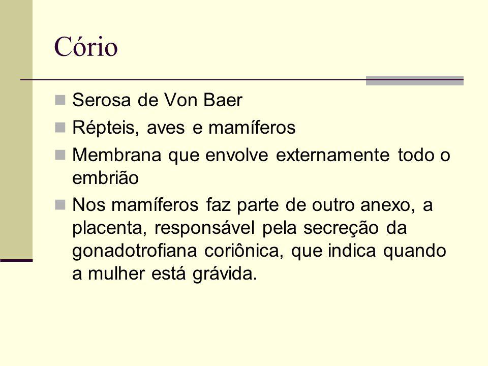 Cório Serosa de Von Baer Répteis, aves e mamíferos
