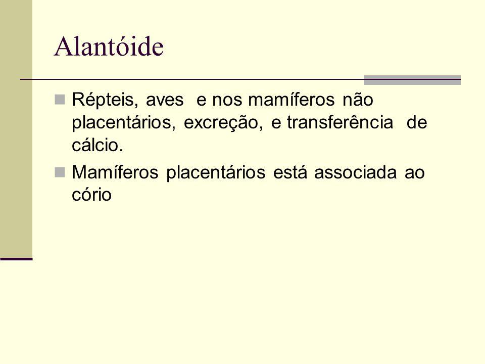 Alantóide Répteis, aves e nos mamíferos não placentários, excreção, e transferência de cálcio.