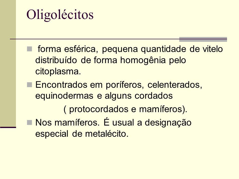 ( protocordados e mamíferos).