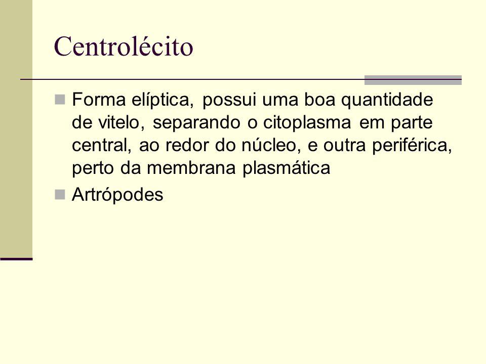 Centrolécito