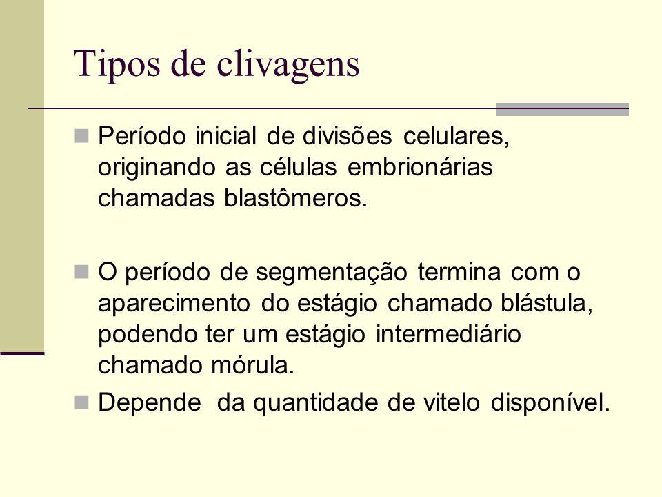 Tipos de clivagens Período inicial de divisões celulares, originando as células embrionárias chamadas blastômeros.