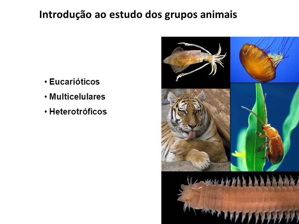 Introdução ao estudo dos grupos animais