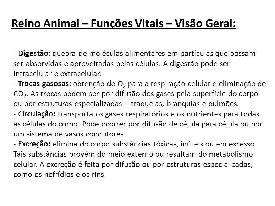 Reino Animal – Funções Vitais – Visão Geral: