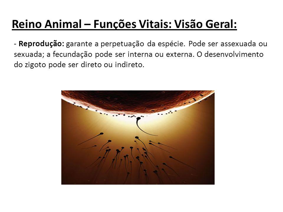 Reino Animal – Funções Vitais: Visão Geral:
