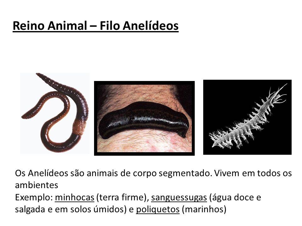 Reino Animal – Filo Anelídeos