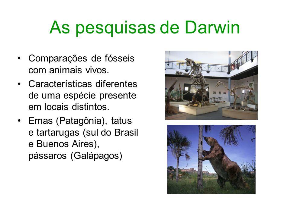 As pesquisas de Darwin Comparações de fósseis com animais vivos.