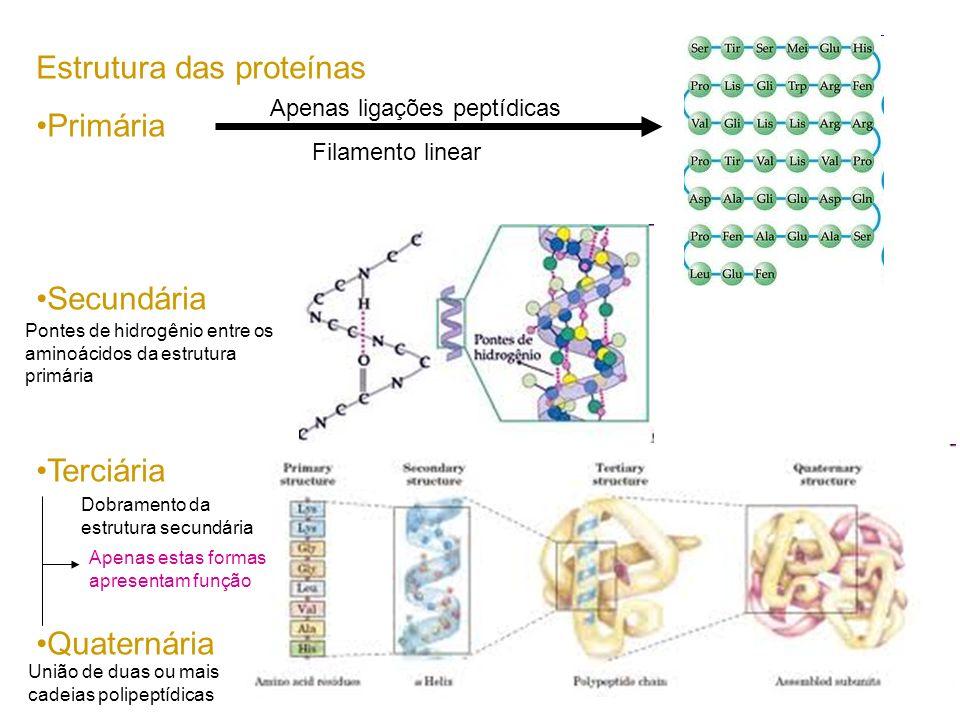 Estrutura das proteínas Primária