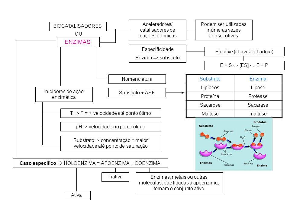 ENZIMAS Aceleradores/ catalisadores de reações químicas