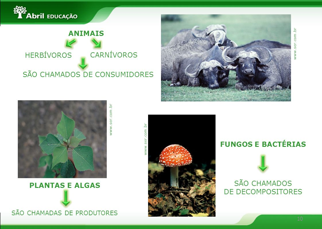 SÃO CHAMADOS DE CONSUMIDORES