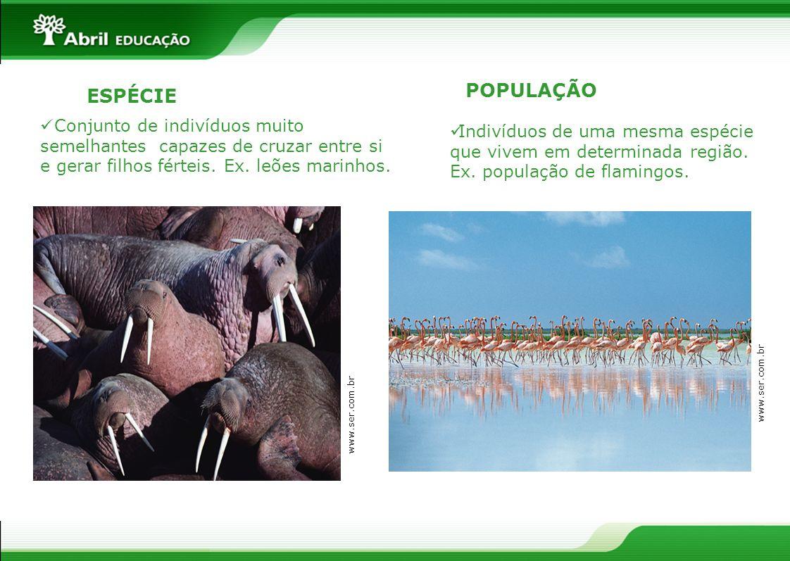 POPULAÇÃO ESPÉCIE. Conjunto de indivíduos muito semelhantes capazes de cruzar entre si e gerar filhos férteis. Ex. leões marinhos.