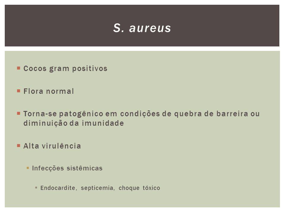 S. aureus Cocos gram positivos Flora normal