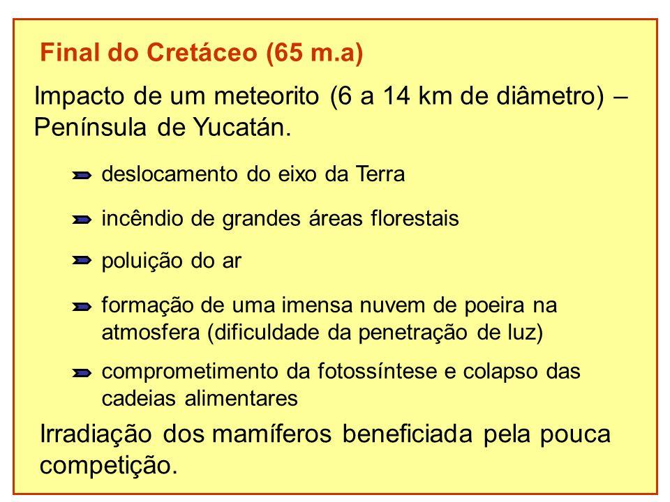 Impacto de um meteorito (6 a 14 km de diâmetro) –