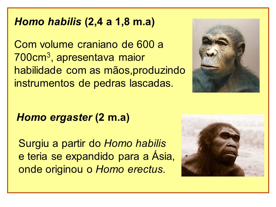 Homo habilis (2,4 a 1,8 m.a) Com volume craniano de 600 a. 700cm3, apresentava maior. habilidade com as mãos,produzindo.