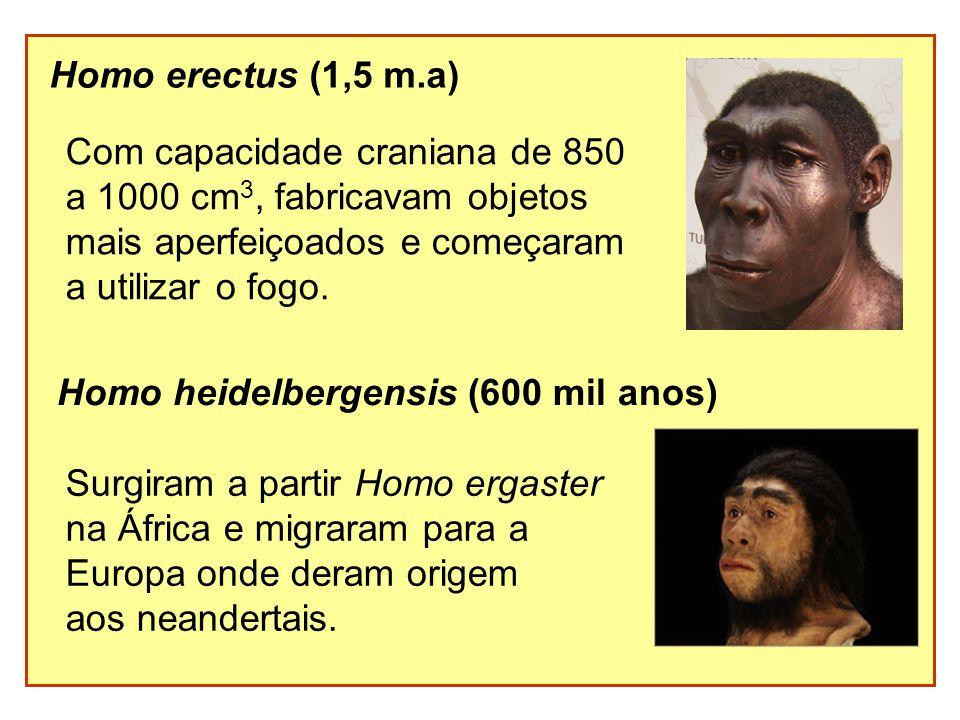 Homo erectus (1,5 m.a) Com capacidade craniana de 850. a 1000 cm3, fabricavam objetos. mais aperfeiçoados e começaram.